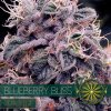 autofem vision seeds blueberry bliss