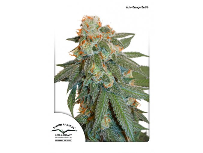 auto orange bud dutch passion 11