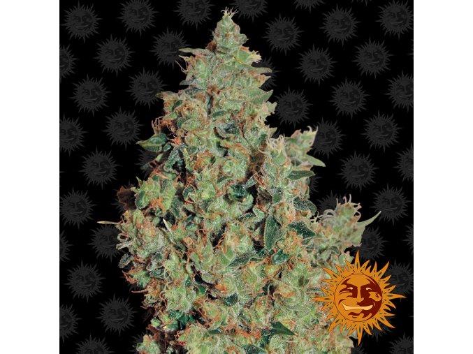 large tangerine dream 1 341916