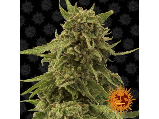 large cbd critical cure 1 341038