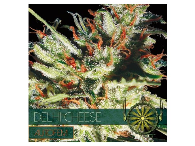 autofem vision seeds delhi cheese