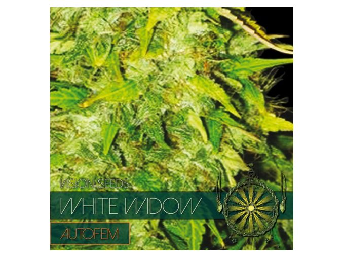 autofem vision seeds white widow