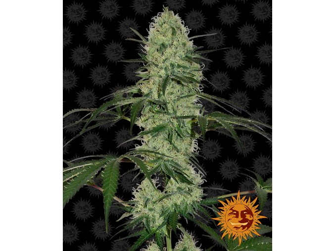 tangerine dream auto circle new 12 864579