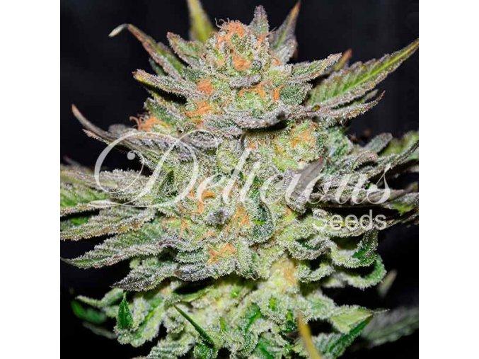 delicious seeds blue ace auto cbd