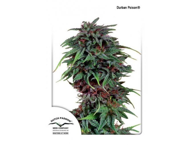 Durban Poison Dutch Passion