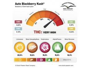 AutoBlackberry Kush Dutch Passion SPRING