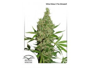 White Widow The Ultimate Dutch Passion