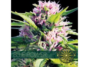 vision seeds blue power