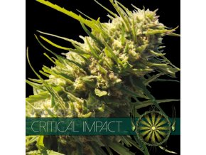 vision seeds critical impact