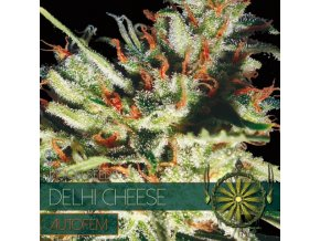 autofem vision seeds delhi cheese