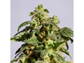 skunk product image 107