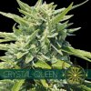 vision seeds crystal queen
