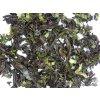 P1010411 NepustilTea.cz thai black pandanus tea a 03