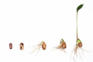 Rady pro výsev semen zajímavých rostlin