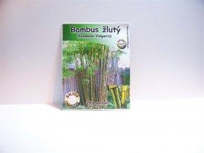 Bambus žlutý - semena 2ks
