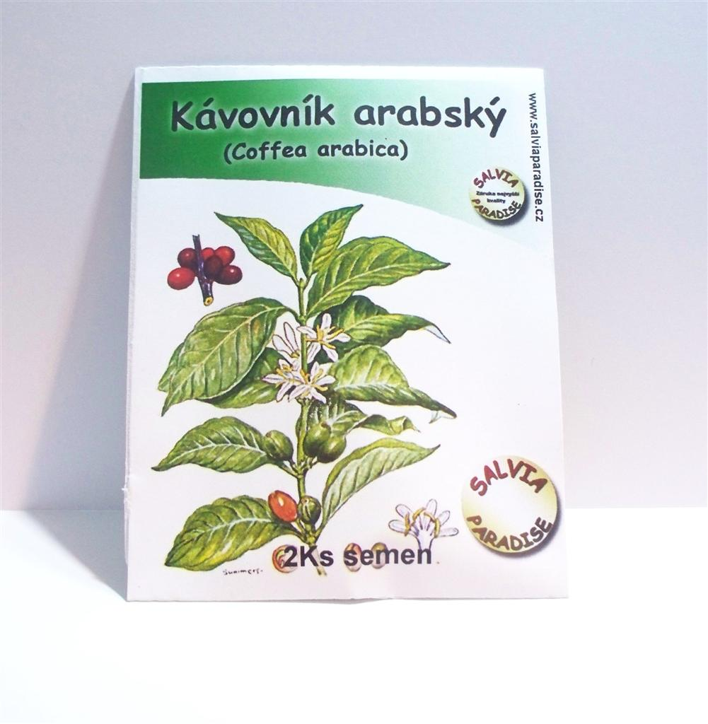 Salvia Paradise Kávovník arabský semena 2 Ks