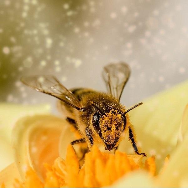 Tipps zur Luftreinigung bei Problemen mit Pollen