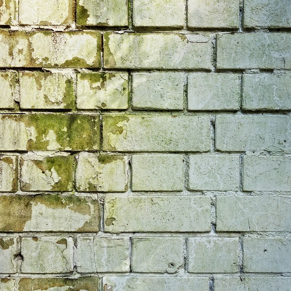 5 Tipps zum Entfeuchten einer schimmeligen Wand mittels Luftentfeuchter