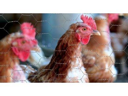Pozinkované pletivo ZN 1 x 50 m šesťhranné (oko 13x13mm)