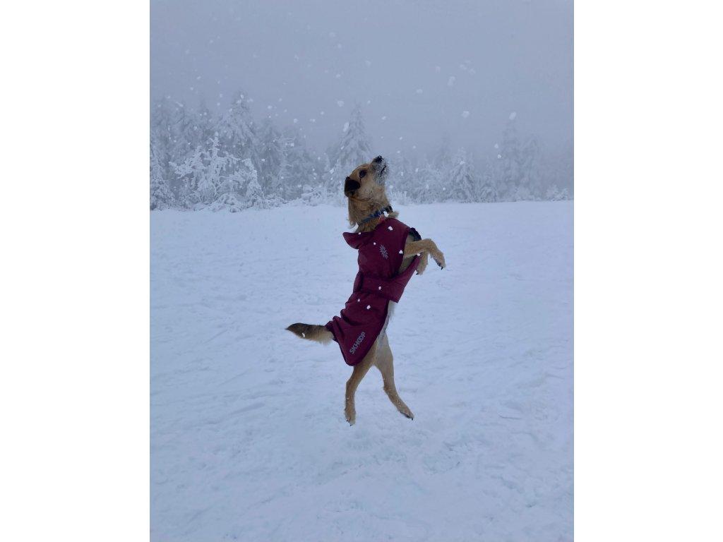 Nikita dog coat ruby red 1