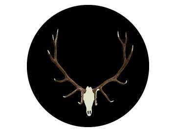 Elk 250x250 1 buck