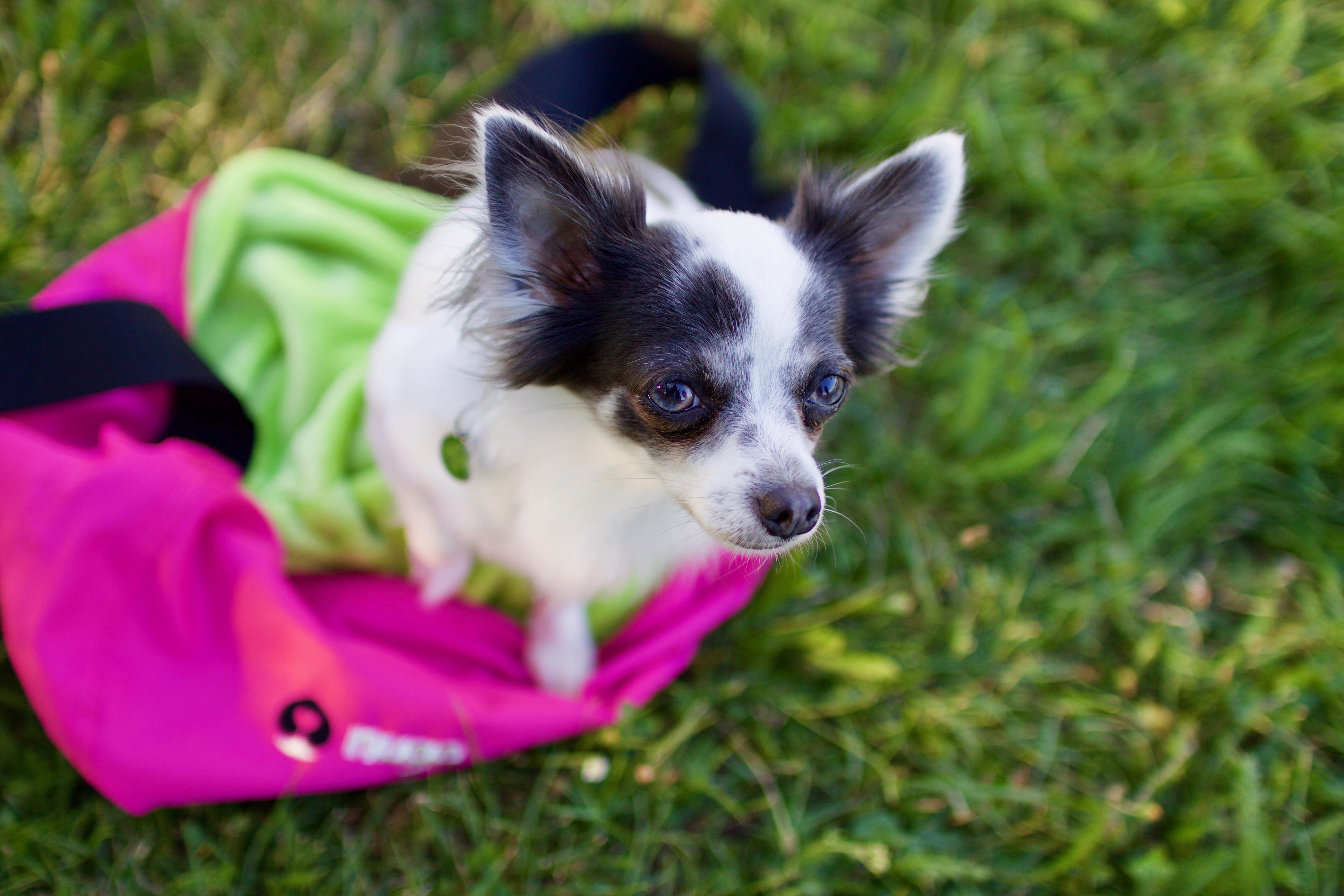 Musí mít taška pro psy pevné dno? A je taška bez pevného dna pro pejsky škodlivá? Odpověď vás uklidní