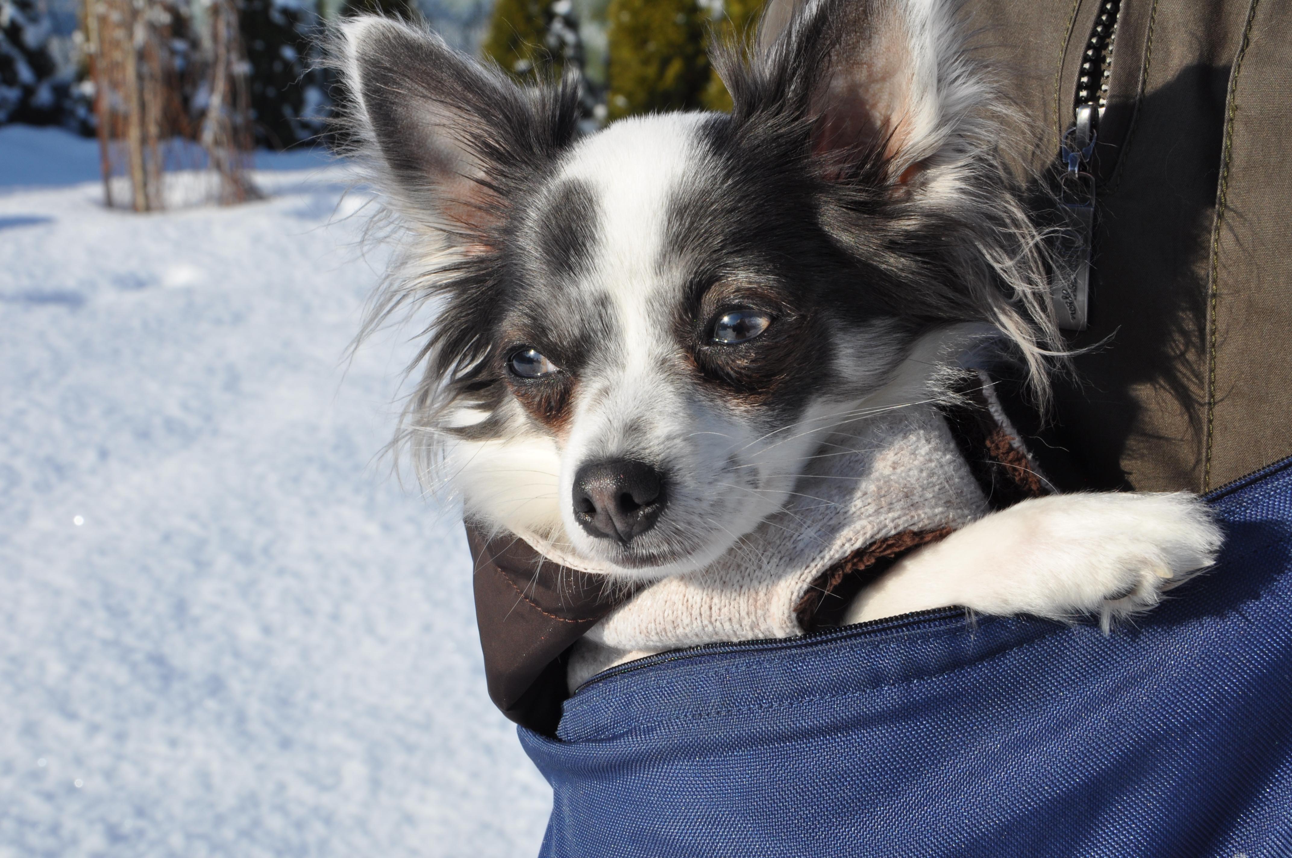 S NUGO taškou jste na studenou zimu připraveni!