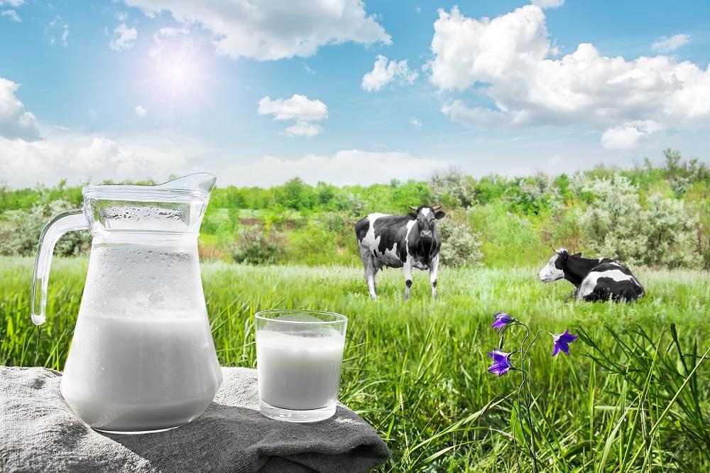 Pijete mléko? A jaké?