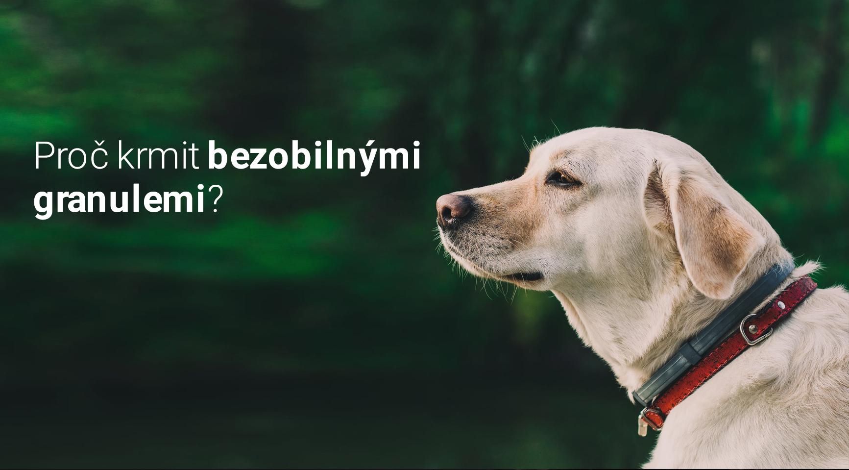 Proč je bezobilné krmivo pro vašeho psa lepší