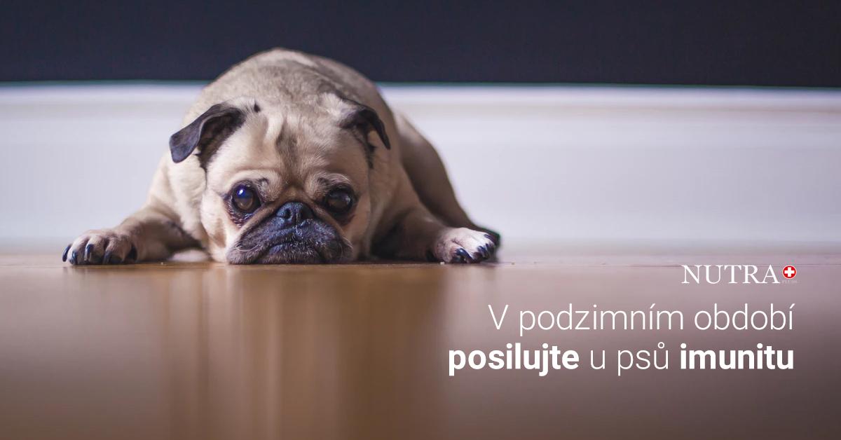 Je váš pes nastydlý? Může za tím být nebezpečná nemoc