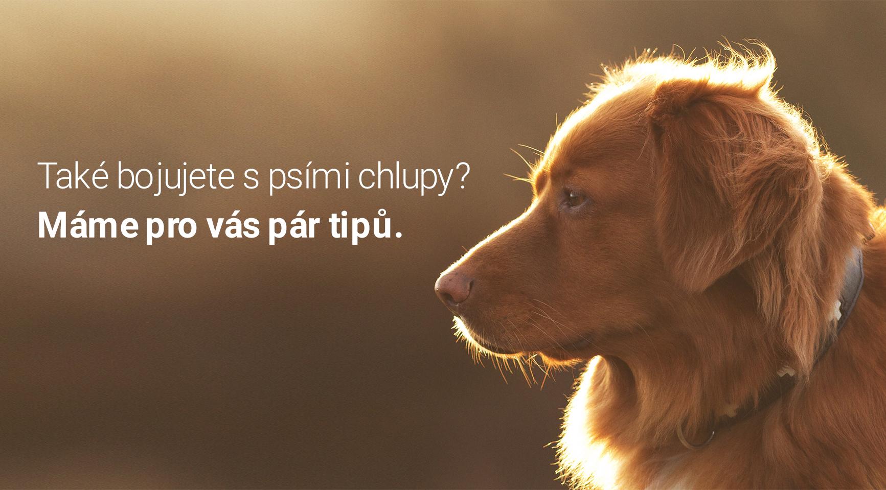 Obtěžuje vás línání vašeho psa?