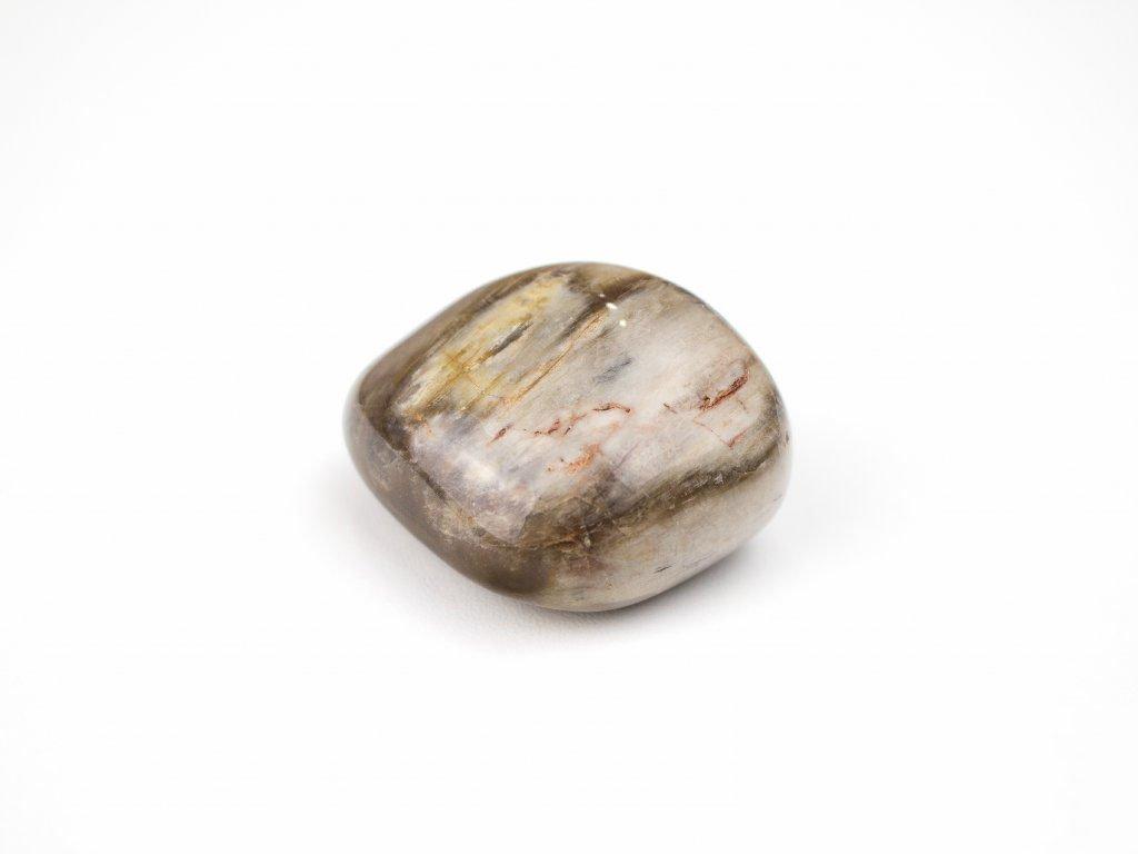 Zkamenělé dřevo - větší