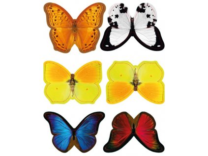 barevni motylci