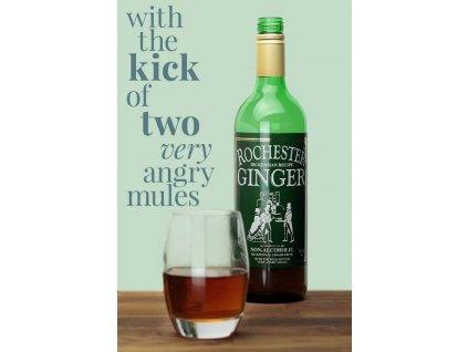 Rochester ginger 725 ml (zázvorový nealkoholický nápoj)