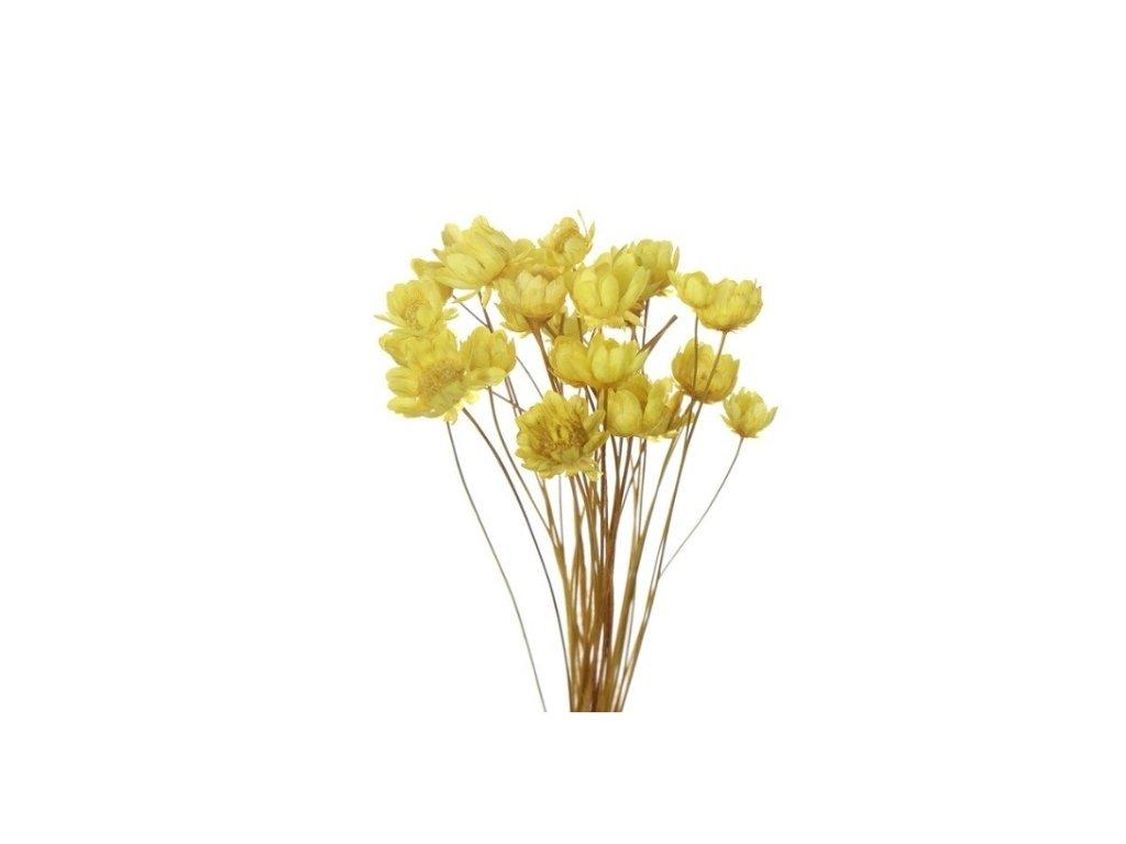dekorace do pryskyrice susene kvetiny zluta