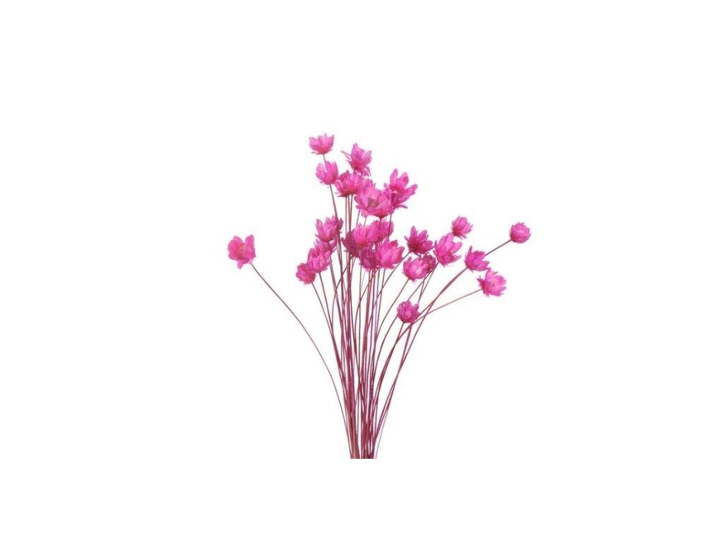 dekorace do pryskyrice susene kvetiny rose red