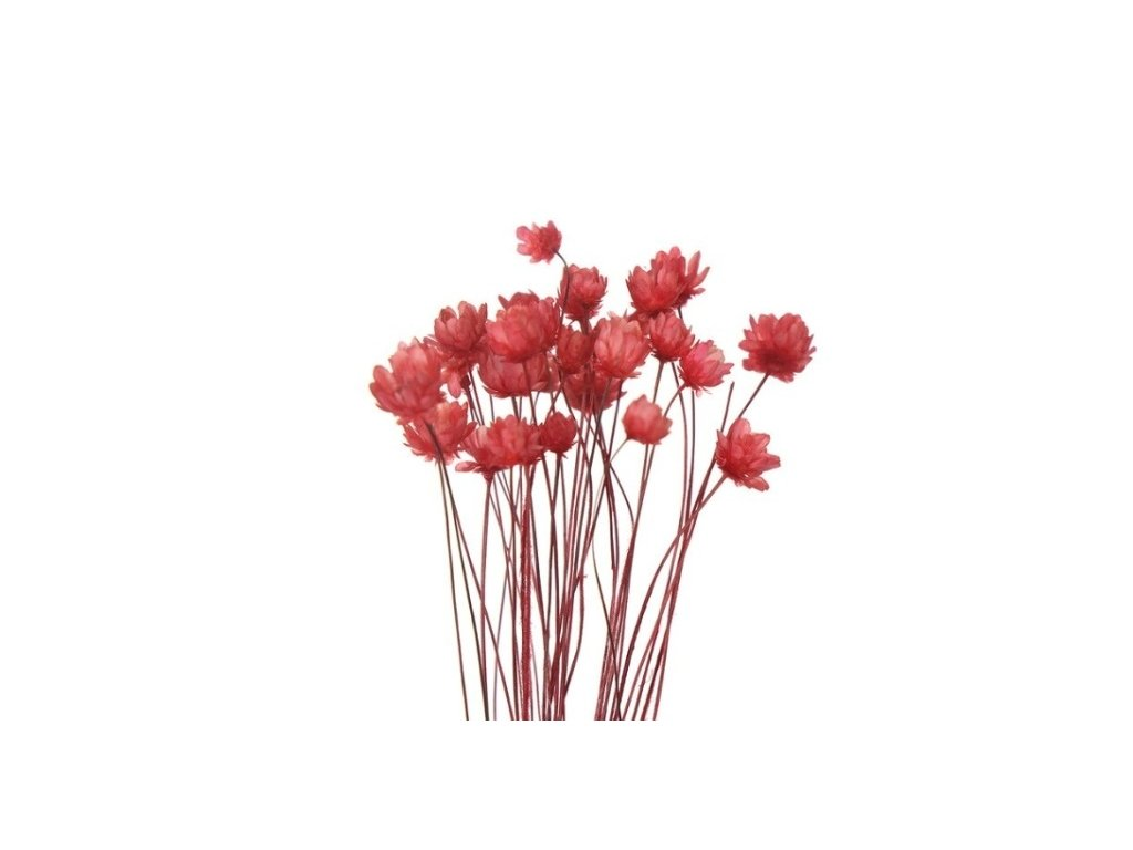 dekorace do pryskyrice susene kvetiny red
