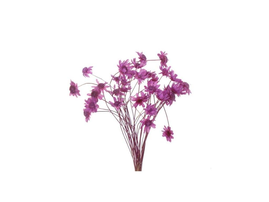 dekorace do pryskyrice susene kvetiny pupple