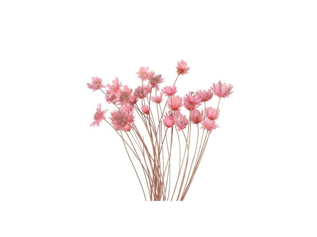 dekorace do pryskyrice susene kvetiny pink