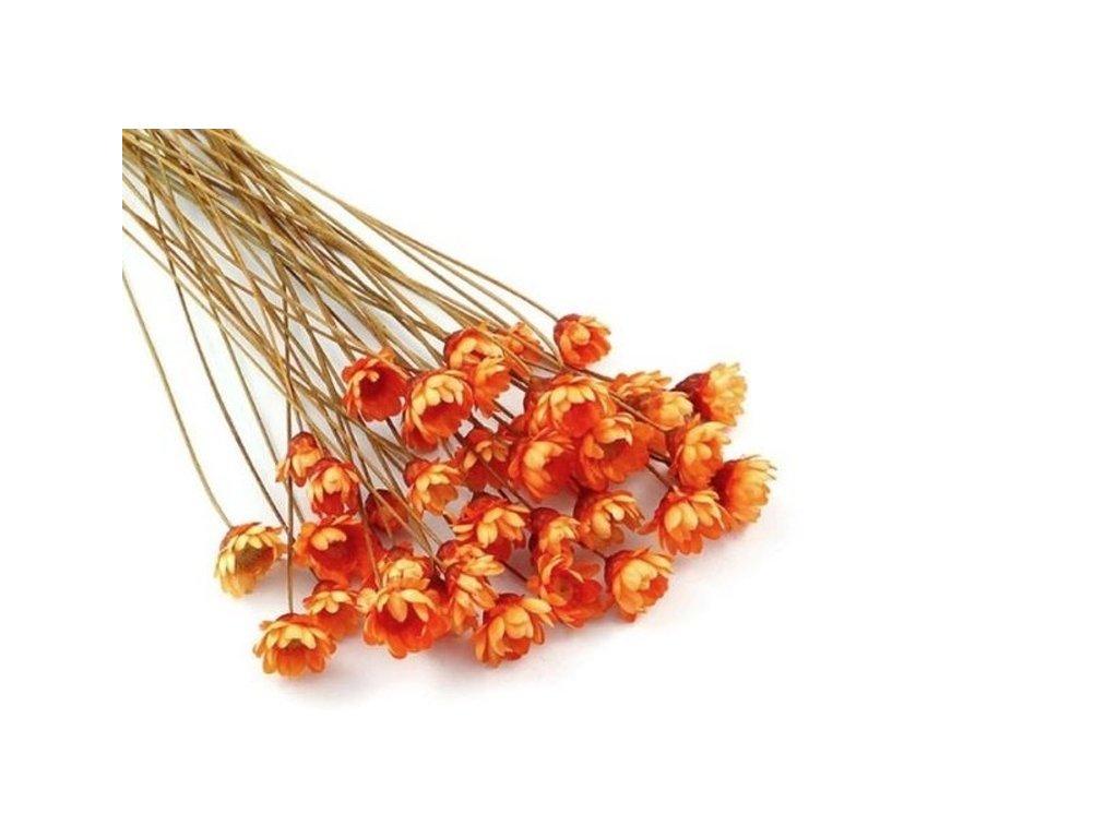 Sušené květy do křišťálové pryskyřice Orange L4 II. jakost 12ks