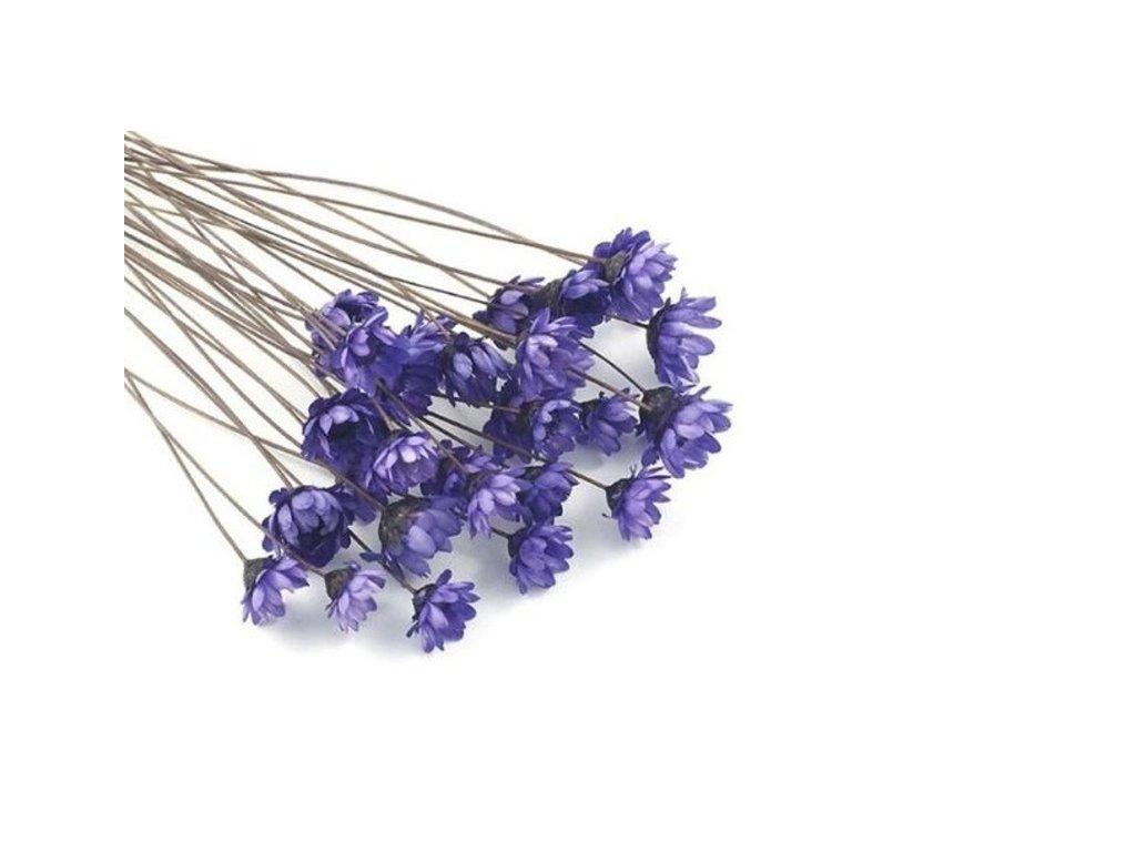 Sušené květy do křišťálové pryskyřice Violet L5 II. jakost 12ks