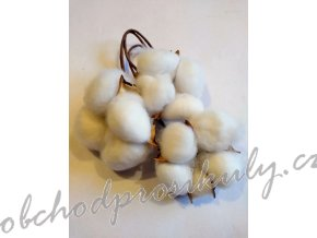 Bavlna, plod přírodní, 3ks