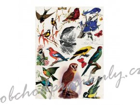 ryzovy papir a4 ptaci