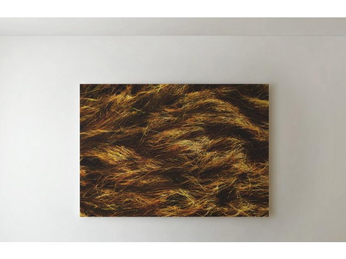 Obraz tráva - 80 x 60 cm