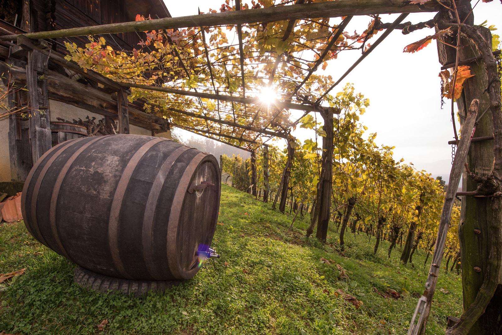 Slovinské vinařské regiony II. – Posavje (Posáví)