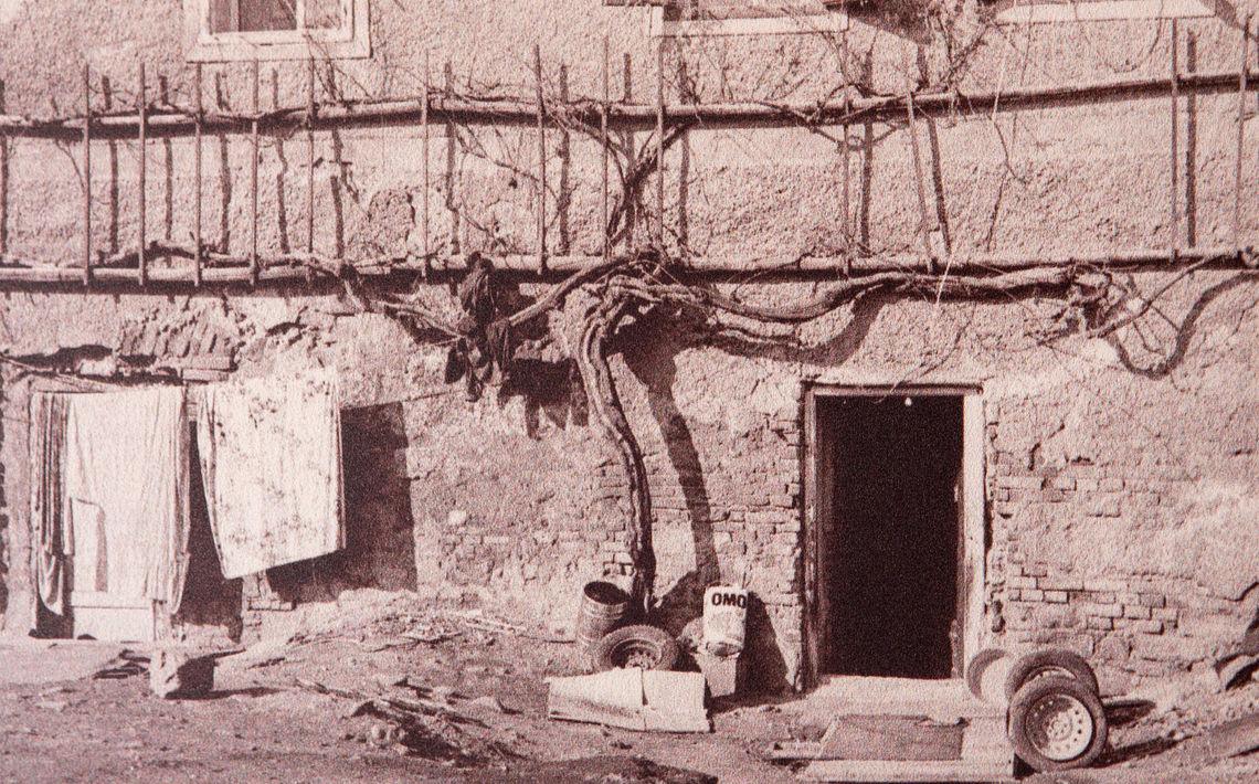 Věděli jste, že nejstarší vína réva na světě se nachází ve Slovinsku?