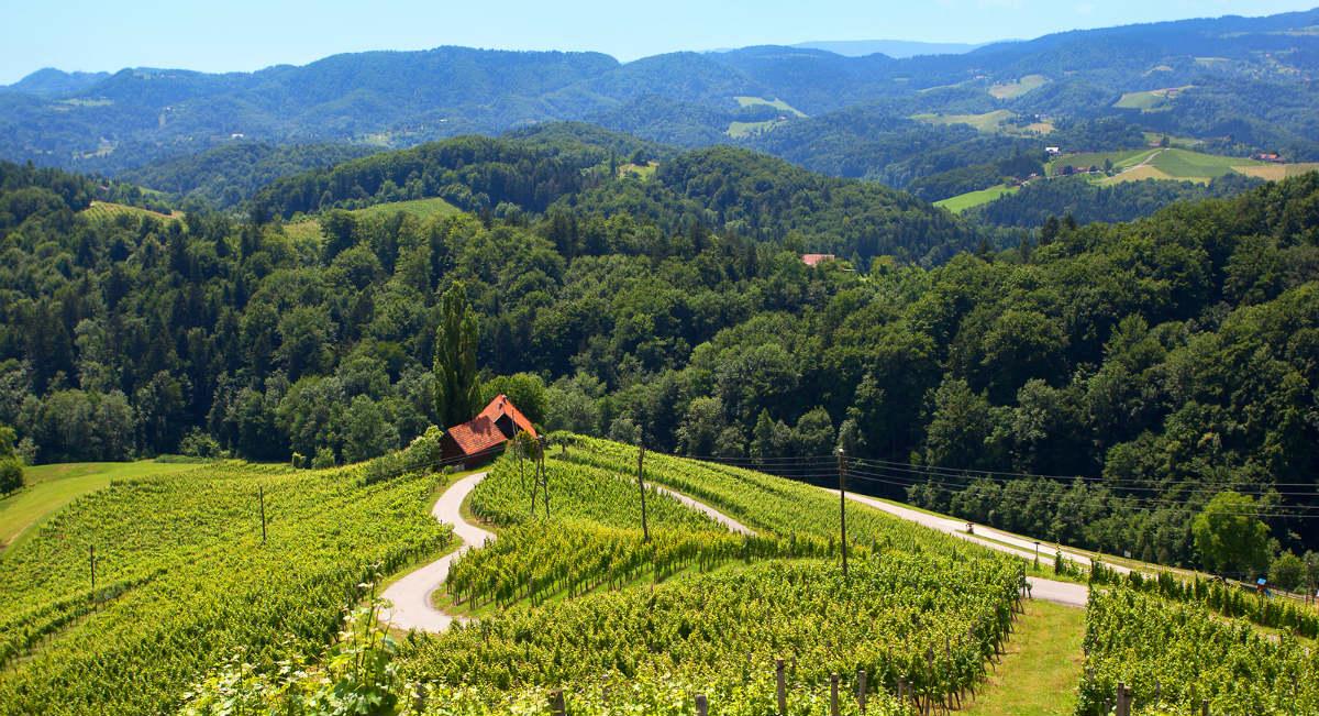 Rozmanitost a okouzlení – tak chutná Slovinsko!