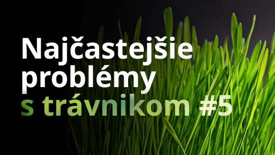 Najčastejšie problémy s trávnikom #5