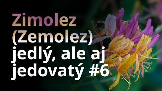 Zimolez (Zemolez) - jedlý, ale aj jedovatý #6