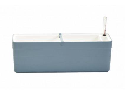 Hrantík Berberis modrá biela 60 cm